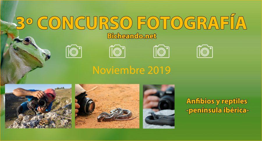 tercer concurso fotografia anfibios y reptiles de la peninsula iberica bicheando.net