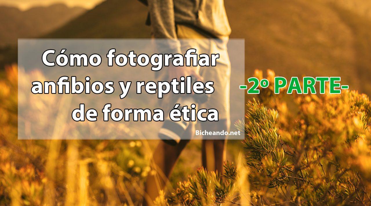 fotografía ética anfibios y reptiles parte 01
