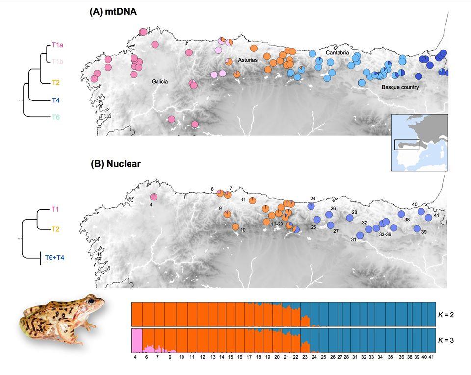 Mapa de distribución. Puntos rosa.