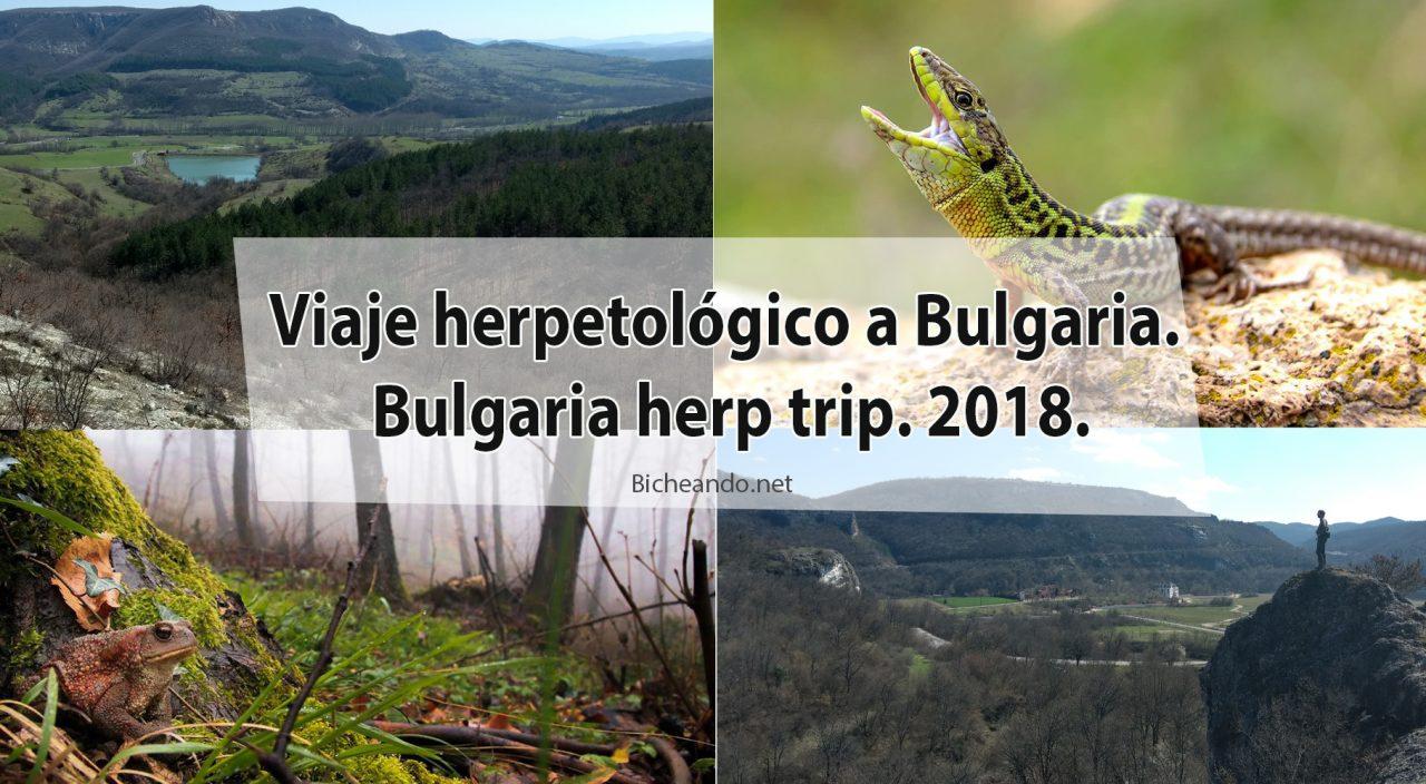 Viaje herpetológico a Bulgaria. Bulgaria herp trip. 2018.