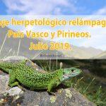 Viaje herpetológico relámpago a País Vasco y Pirineos. Julio 2019.