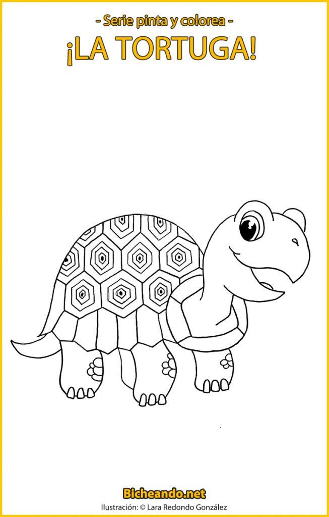 lámina para colorear tortuga