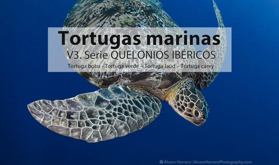 tortugas marinas península iberica