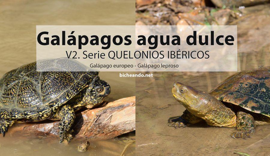 especies de galápagos de españa