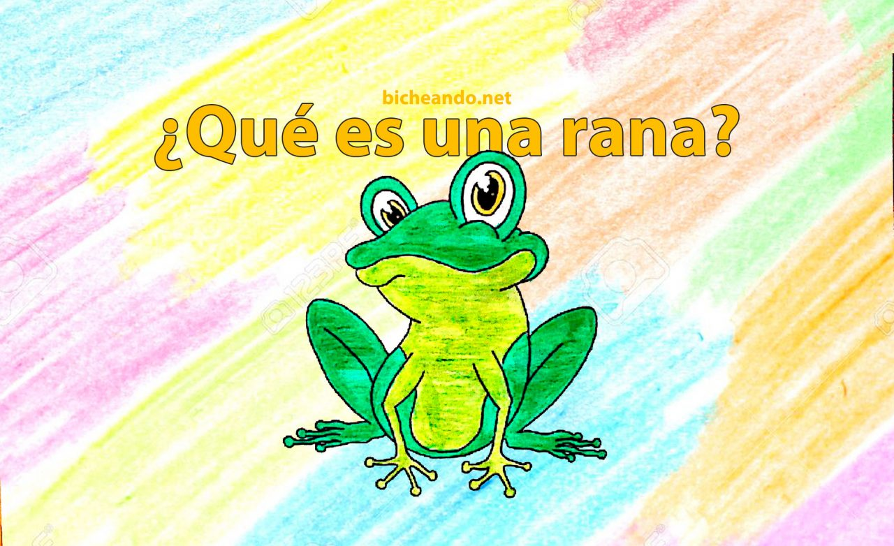 que es una rana