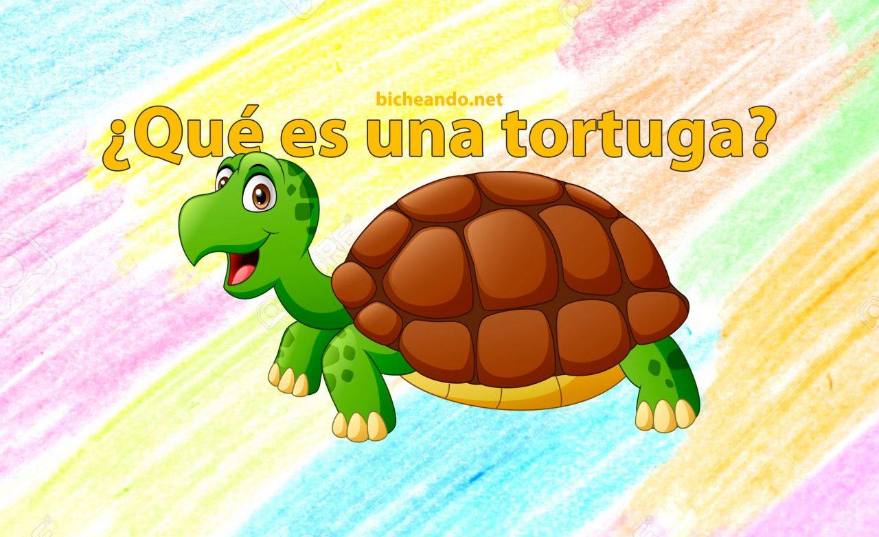 que es una tortuga