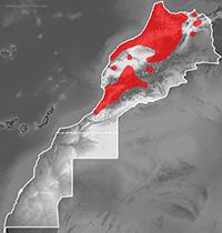 https://bicheando.net/wp-content/uploads/2020/11/Hyla_meridionalis_mapa.jpg