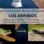 anfibios del norte de africa peninsula iberica