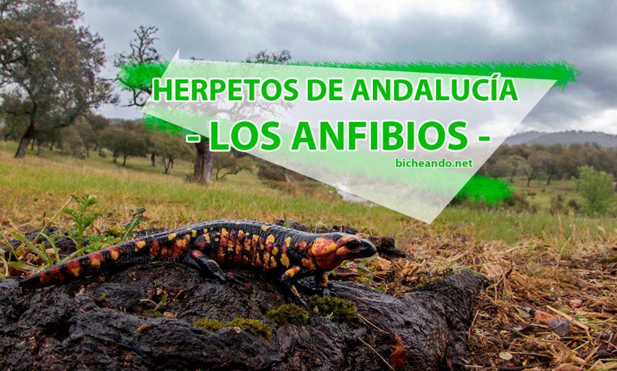 anfibios de andalucia