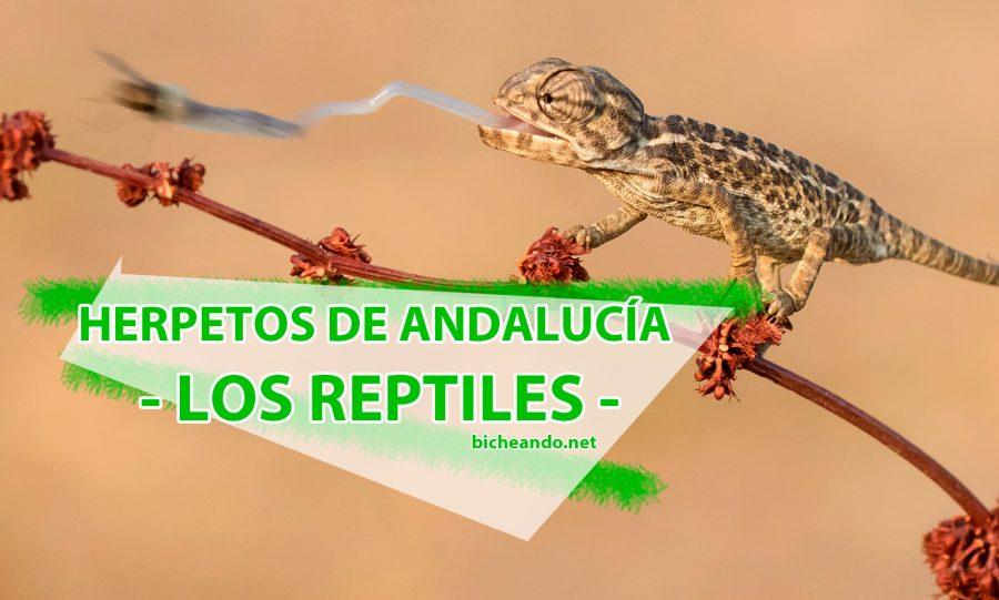 reptiles de Andalucía