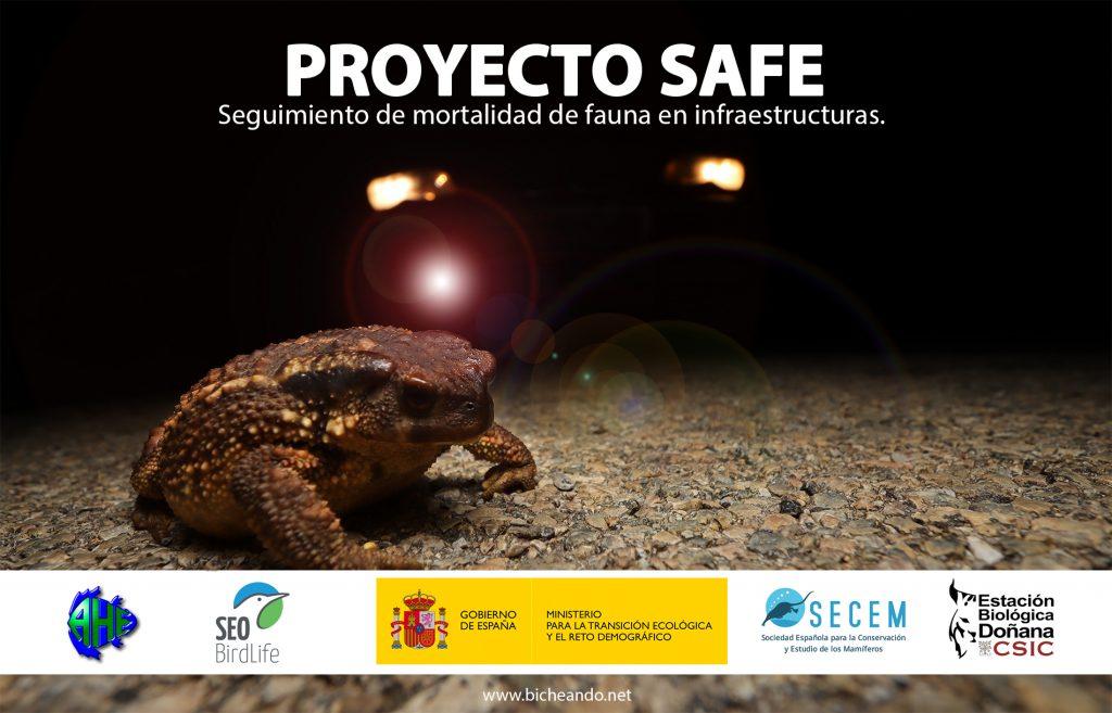 SAFE, Stop Atropellos de Fauna en España: evaluar la mortalidad de fauna por atropellos