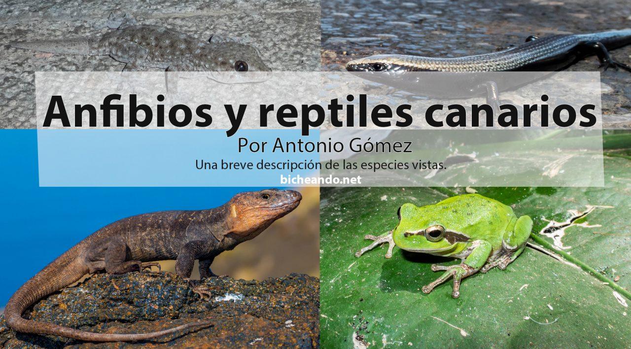 Anfibios y reptiles de las Islas Canarias